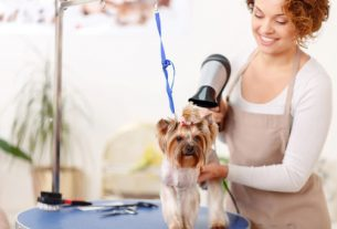 pet grooming miami