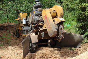 tree stump removal raleigh